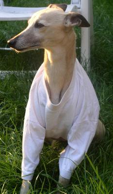 Fee mit Verband unterm T-Shirt (5/08)